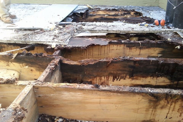 What is Dry and Wet Timber Rot?